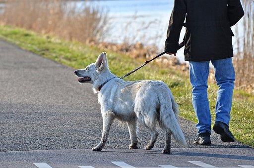 Dog, Canine, Mammal, Animal, White Dog, Leash, Man