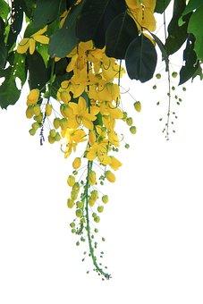 Background, Leaf, Plant, Nature, Arbor Le