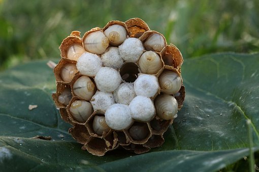 Nature, Hornets Asian