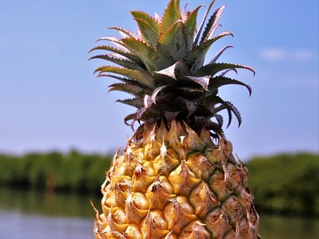 Pineapple, Fruit, Bio, Healthy, Juicy, Natural, Nature