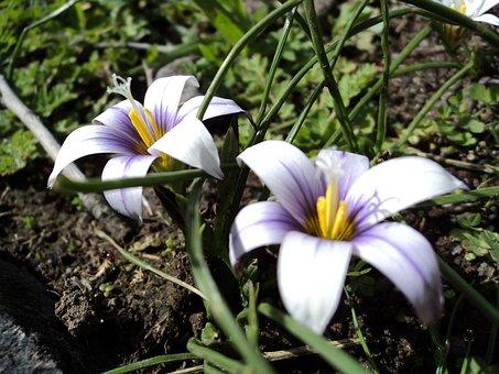 Flower, Nature, Plant, Petal, Freshness, Flowering