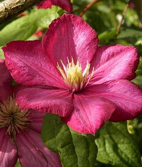 Garden, Plant