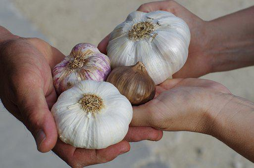 Garlic, Garlic White, Purple Garlic, Black Garlic