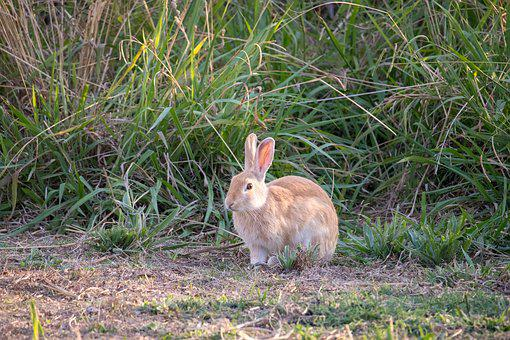 Grass, Nature, Animal, Little, Rabbit