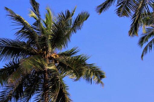 Palma, Sky, Tree, The Tropical, Summer, Beach, Wind
