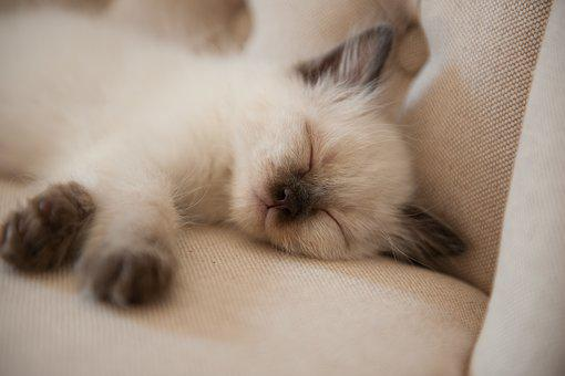 Cute, Portrait, Animal, Young, Pet, Cat, Small, Sleep