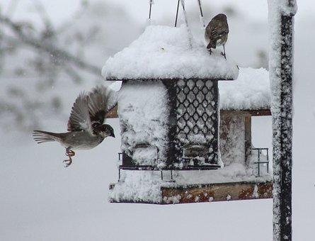 Bird, Winter, Snow, Pigeon, Cold, Flying Bird