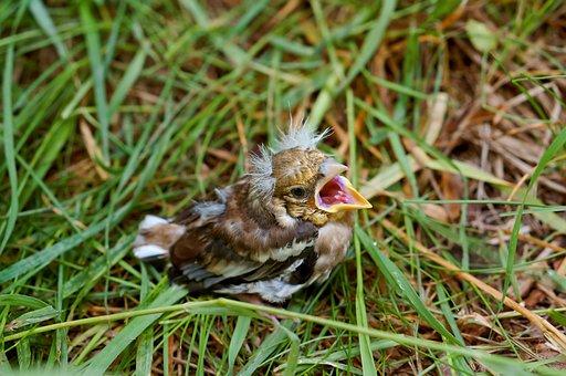 Jack, Chick, Baby, Nature, Wild, Bird, Spring, Summer