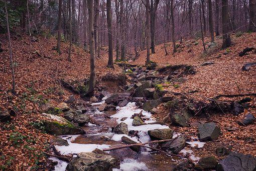 Nature, Forest, Landscape, Leaves, Mood, Color, Stone