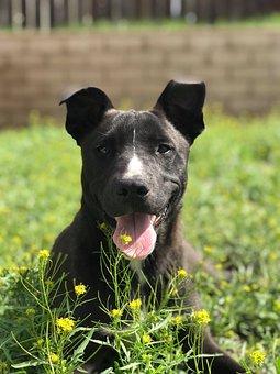 Animal, Grass, Field, Dog, Cute, Pet, Outdoors, Summer