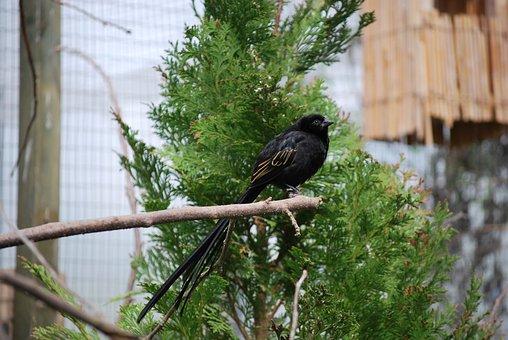 Nature, Bird, Tree, Outdoors, Wildlife, Wood, Animal