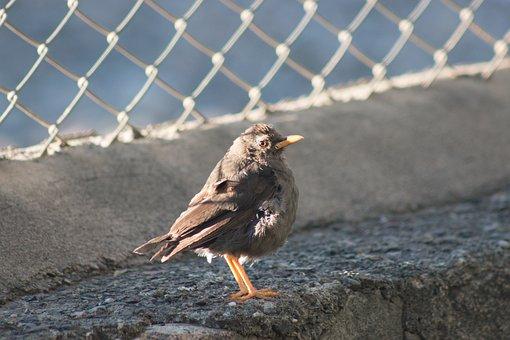 Nature, Animalia, Birds, Outdoors, Wild Life, Wild