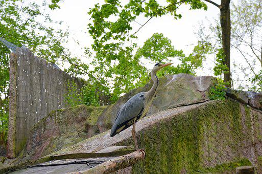 Nature, Tree, Park, Wood, In The Free, Heron, Leaf