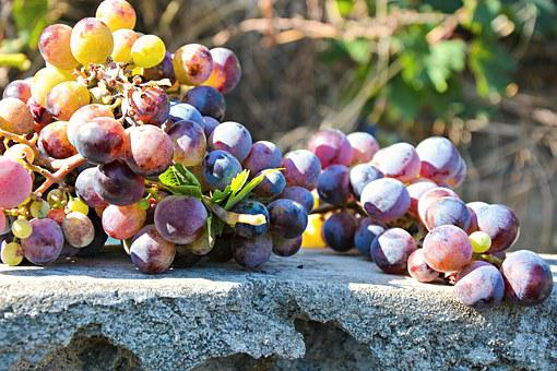 Grapes, Nature, Food, Fruits, Agriculture, Wine, Vine