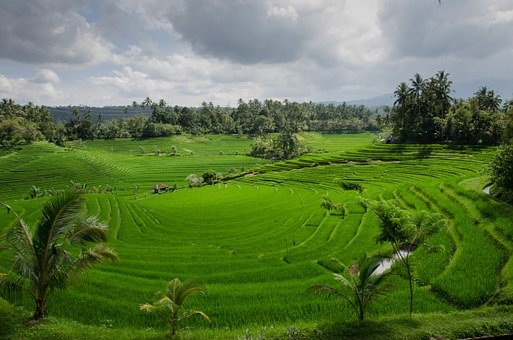 Rice Terraces, Paddy, Paddies, Agriculture, Asia