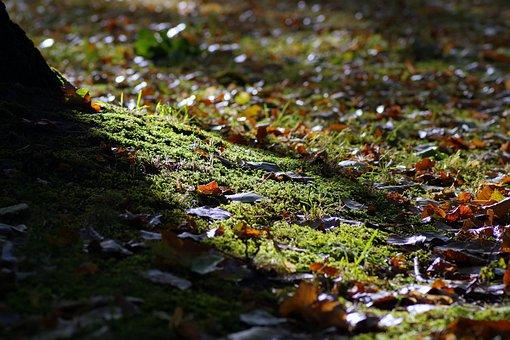 Autumn, Morning, The Sun's Rays, Park, Forest, Blurry