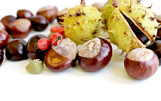 Chestnut, Autumn, Nature, Tree, Prickly, Park, Shell