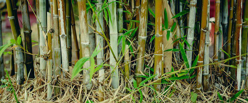 Bamboo, Green, Background, Tree, Forest, Nature, Japan