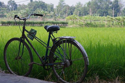 Bicycles, Bike, Vehicles, Greenery, Grasses, Paddy