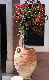 Flower, Santorini, Caldera, Blue, Greece