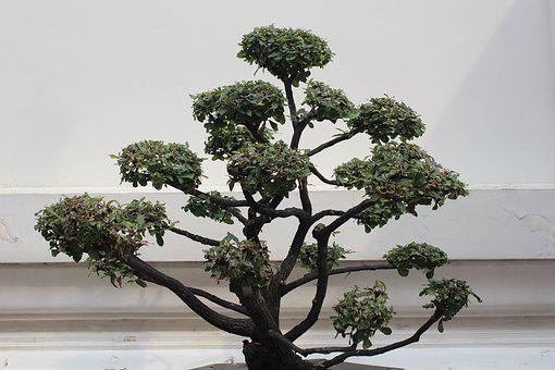 Bonsai, Tree, Decoration, Potted Plant, Bonsai Tree