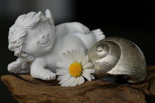 Guardian Angel, Daisy, Cheerful, White, Blossom, Bloom