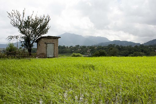 Rice, Fields, Agriculture, Paddy, Field, Countryside