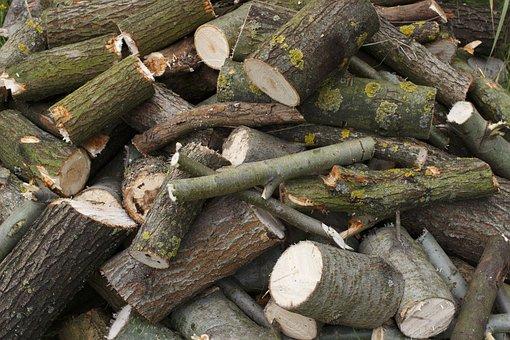 Firewood, Drome, Tree, Forest, Pile, Lap, Faggot, Brush