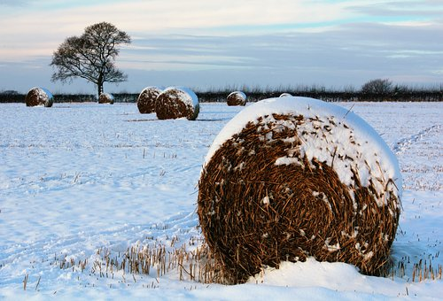 Hay Balls, Field, Grass, Landscape, Countryside