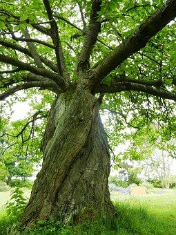 Tree, Foliage, Green, Green Tree, An Unusual Tree