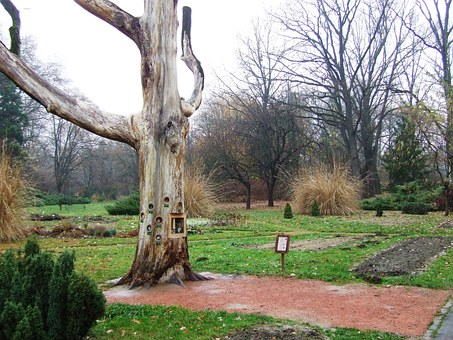 Szeged Hungary, Arboretum, Old Oak, Jardin Des Plantes