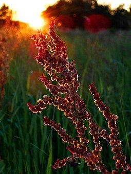 West, Meadow, Seeds, Polyana