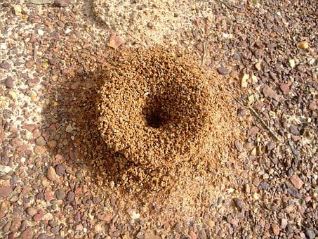 Anthill, Ant, Insect, Nature, Colony, Worker, Pest