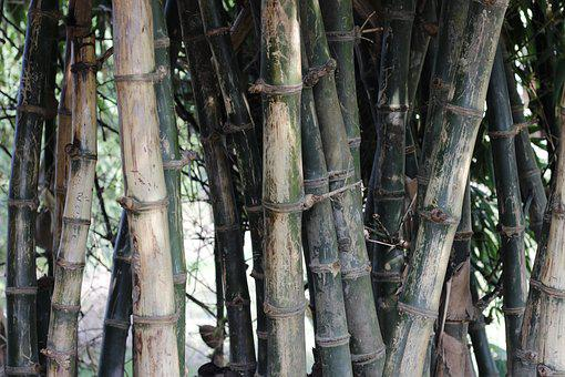 Bamboo, Green, Nature, Natural, Forest, Decoration