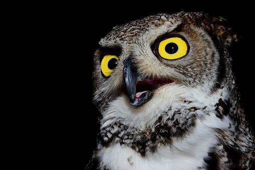 Owl, Volatile, Raptor, Beak, Feathers, Pens, Ali