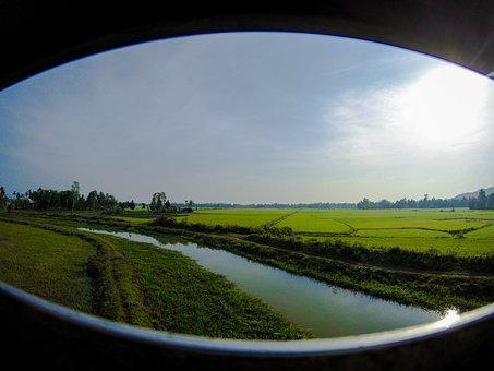Vietnam, Train Ride, Rice, Rice Paddy, Environment