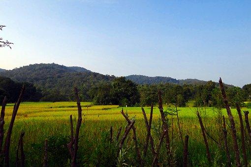 Paddy Fields, Rice, Fields, Countryside, Rural