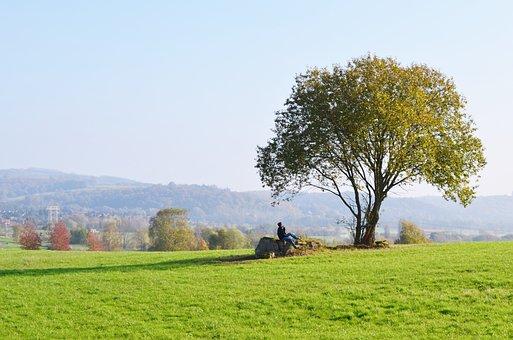 Tree, Meadow, Reverie, Landscape, Polyana, Nature, Sky