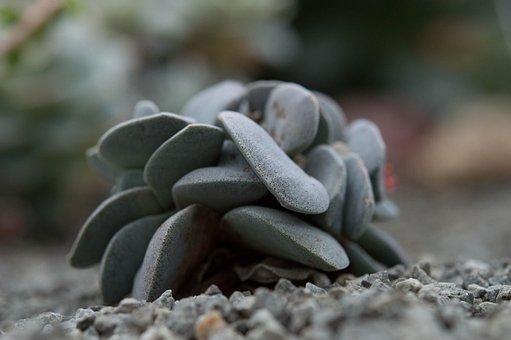 Cactus, Gray, Stone, Jardin Des Plantes
