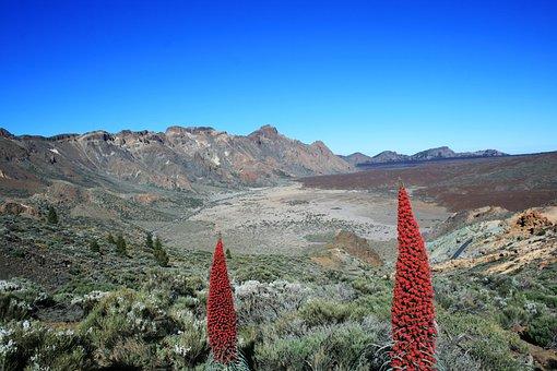 Tajinaste Rojo, Teide, Tenerife, Volcano, El Teide