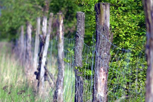 The Fence, Forest, Wooden, Old, Meadow, Grass, Summer
