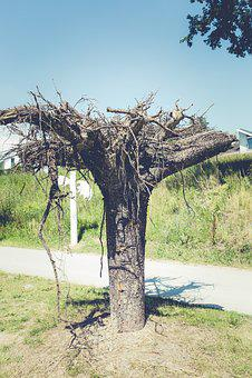 Art, Nature, Forest, Garden, Creativity, Tree, Statue