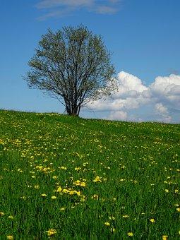 Tree, Meadow, Nature, Landscape, Green, Poland, Polyana
