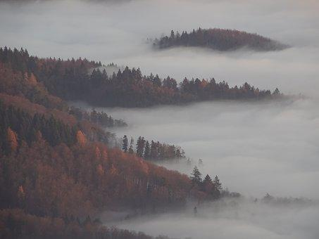Fog, Forest, Autumn, Smoke, Mist, Trees, Mystical, Mood