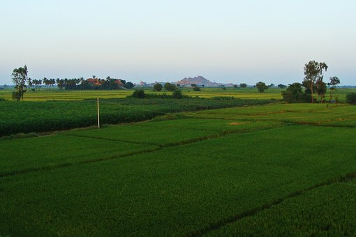 Tungabhadra Plains, Raichur, Rice Fields, Gangavati