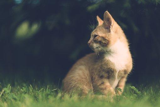 Cat, Village, Vintage, Wooden, Outdoor, Animal, Pet