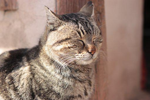 Cat, Animal, Mammal, Cute, Pet, Portrait, Looking