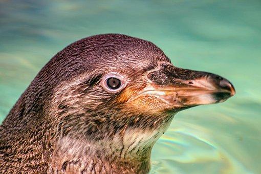 Animal World, Nature, Animal, Bird, Penguin, Zoo