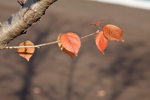 Nature, Leaf, Wood, Autumn, Plants, Dry, Season, Leaves