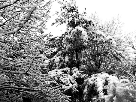 Winter, Tree, Snow, Brina, Nature, Bn, Black And White